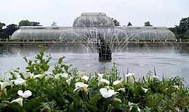 Palm house and fountain with lilies in foreground. - geograph.org.uk - 486504.jpg