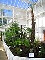 Palm house interior - Oslo Botanical Garden - IMG 9035.jpg