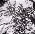 Paolo Monti - Serie fotografica (Italia, 1964) - BEIC 6361609.jpg