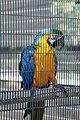 Paphos Zoo, Cyprus - panoramio (5).jpg