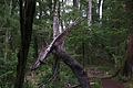 Parque Nacional Huerquehue - Flickr - czdiaz61 (1).jpg