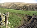 Pasture field - geograph.org.uk - 376914.jpg