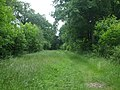 Path in Foxley Wood - geograph.org.uk - 1692074.jpg