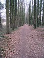 Path through the trees - geograph.org.uk - 1746786.jpg