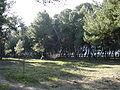 Pescara Riserva naturale Pineta di Santa Filomena03.JPG