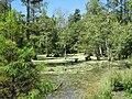 Peterson Lake Nature Center Collierville TN 20.jpg