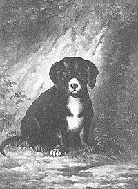 Piet Mondriaan - Puppy - A12 - Piet Mondrian, catalogue raisonné.jpg