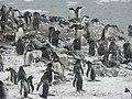 Pingüinera.jpg