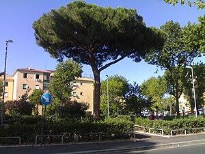Acilia - A Stone Pine in Giovanni Segantini Square