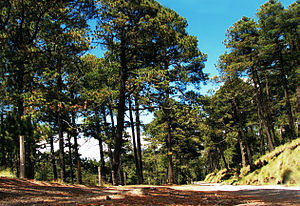 Trans-Mexican Volcanic Belt pine-oak forests - Popocatépetl, Puebla state