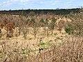 Plantation south of Hurworth Burn Reservoir - geograph.org.uk - 150761.jpg