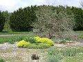 Poland. Warsaw. Powsin. Botanical Garden 096.jpg