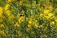 Pollinators0038 (25167986448).jpg