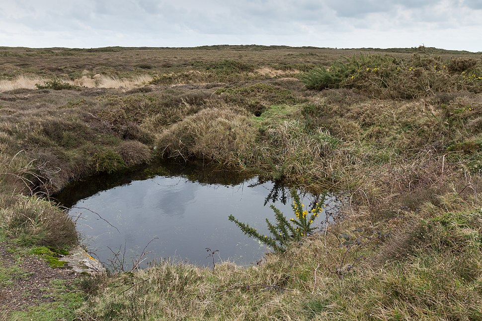 Pond at Les Landes, Jersey