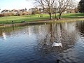Pond in Queens Park Brighton - geograph.org.uk - 1271773.jpg
