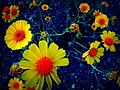 Power Flower - Flickr - Dawn Endico.jpg