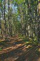 Prírodná rezervácia Borsukov vrch, Národný park Poloniny (02).jpg