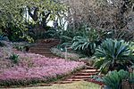 The Pretoria National Botanical Garden was founded in 1946 and today it contains one of the most important and comprehensive collections of indigenous flora in the country. The Garden is divided into 11 sections representing the major vegetation types of Type of site: Botanical Garden