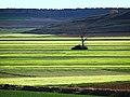 Primavera en Gallocanta.jpg