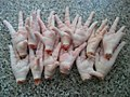 Processed Frozen Chicken Feet & frozen chicken Paws.jpg