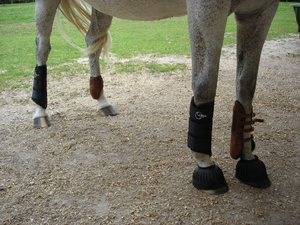 Splint boots - Horse modeling four different types of brushing boots