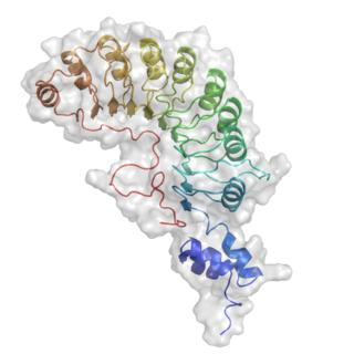 SKP2 protein-coding gene in the species Homo sapiens