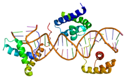 Protein SOX14 PDB 1gt0.png