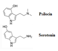 PsilocinVSserotonin.png