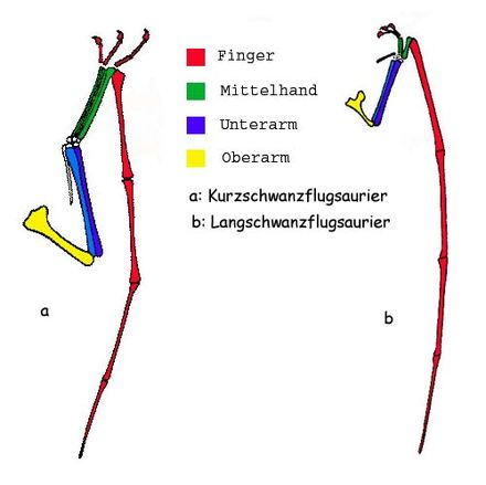 Flugsaurier - Wikiwand