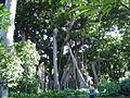 Puerto de la Cruz (Jardin Botanico) 07.jpg