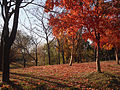 Pyeonghwa (Peace) Park.jpg