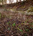 Quarry Moor (44).JPG