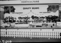 Queensland State Archives 1776 Department of Agriculture and Stock displays at the annual exhibition of the Royal National Association Brisbane August 1955.png