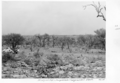 Queensland State Archives 5277 McIntyres Gap Hungerford to Thargomindah S Route January 1955.png
