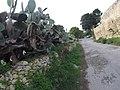 Rabat, Malta - panoramio (105).jpg