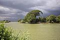 Rain tree laos 4000 islands.jpg