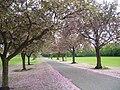 Ray Park - geograph.org.uk - 1919439.jpg
