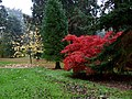 Red Leaves in the Rain, Batsford Arboretum (3) - geograph.org.uk - 1538997.jpg