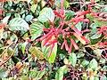 Red flower image 4.jpg