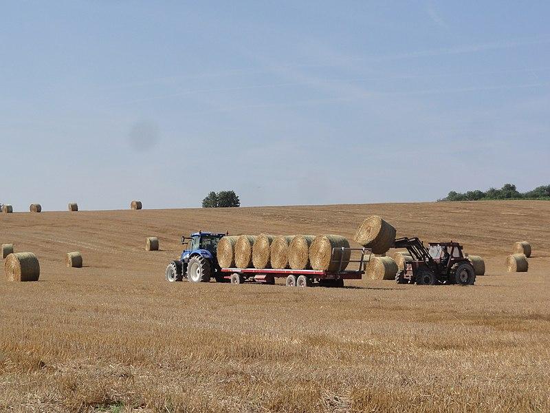 Regny (Aisne) harvesting