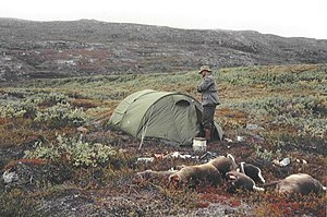 Reindeer hunting in Greenland - A hunting campsite in Godthåb's fjord