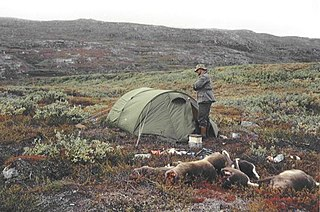Reindeer hunting in Greenland The practice of hunting reindeer for their meat, fur, and antlers in Greenland