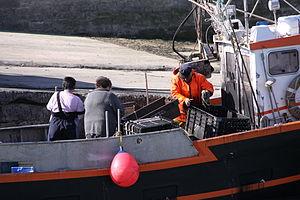 Retour de la pêche à la seiche du fileyeur Jason IV (33).JPG
