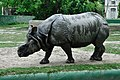 Rhinoceros unicornis - Kolkata 2011-05-03 2573.JPG