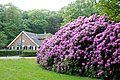 "Rhododendron with ancient building called ""Teerplaats"" at entrance of Sonsbeek Park Arnhem. De Teerplaats is now a Bed ^ Breakfast - panoramio.jpg"