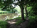 River bank footpath - geograph.org.uk - 1388580.jpg