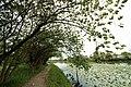 Riverside - panoramio (14).jpg