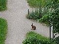 Sídliště Zahradní Město, zajíc.jpg