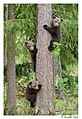 Safe up in the tree (14299938856).jpg