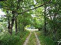 Saint-Jean-d'Ataux chemin menant à l'étang d'Ataux.JPG
